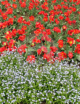 Red Tulips And Some Other White Flowers Stock Images