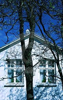 Vecchia casa, vecchio albero Immagine Stock
