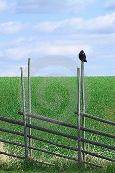 休息的鸟 图库摄影