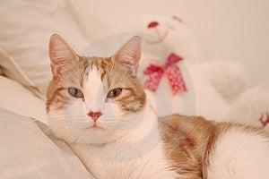 Cat Free Stock Photos