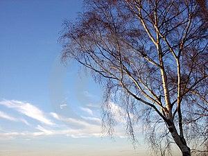 Tree And Sky 4 Stock Photos