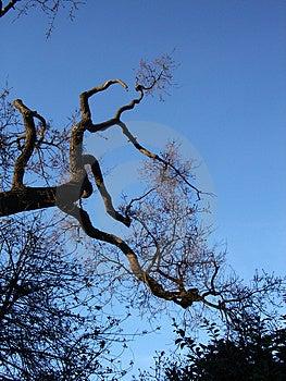 Tree And Sky 8 Free Stock Photo