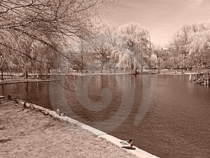Boston's Public Gardens in the Spring Royalty Free Stock Image