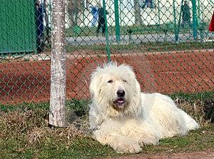 Dog Free Stock Image
