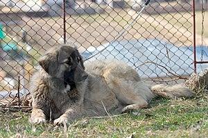 Dog Free Stock Photos