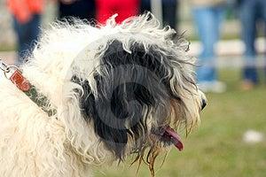 Mangy Dog Stock Photo