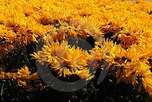 Yellow World Free Stock Photos