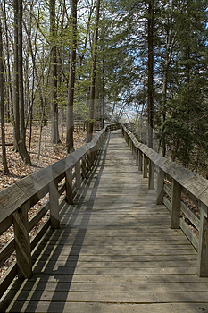 Forest Boardwalk Image stock