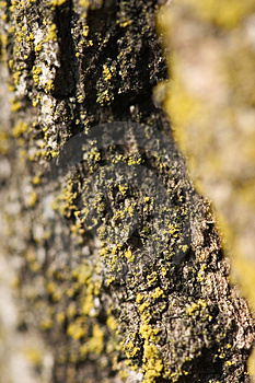Tree Bark Stock Photo