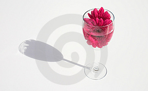 Drinking Flowers Stock Image
