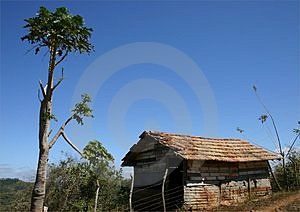 Hut and tree Royalty Free Stock Photo