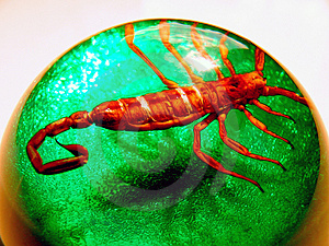 Scary Scorpion Dome Stock Photos - Image: 1129663