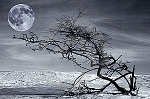 Dried tree and full moon Royalty Free Stock Photography