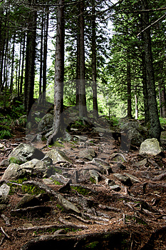 Ancient Forest Stock Image - Image: 1137981