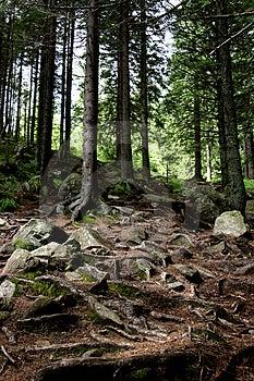 Alter Wald Stockbild - Bild: 1137981