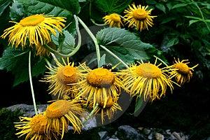 黄色开花花束 库存照片 - 图片: 1138323