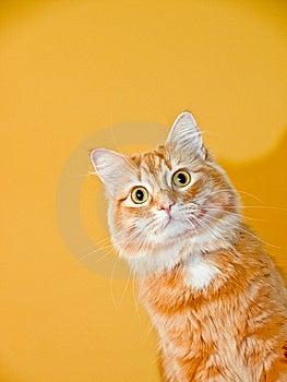 Cat Puppet Fotografie Stock
