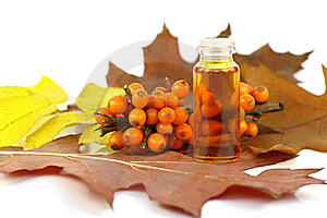 Berries of sea-buckthorn berries and medical oil Free Stock Photography