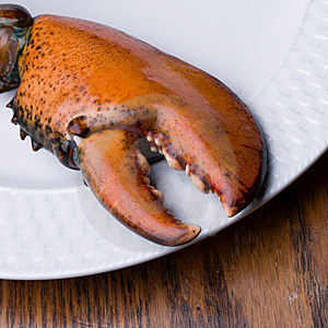 Lobster Claw Royalty Free Stock Image - Image: 11581036