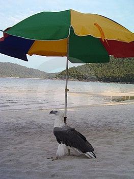 Aquila Di Pesce Fotografia Stock Libera da Diritti - Immagine: 1162747