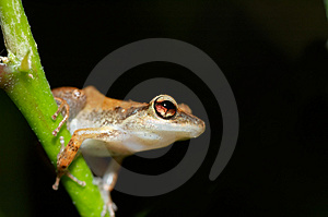 Cute Frog Stock Image - Image: 1164421