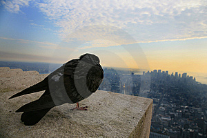 Bird's Eye View Of The City Stock Photography - Image: 11681202