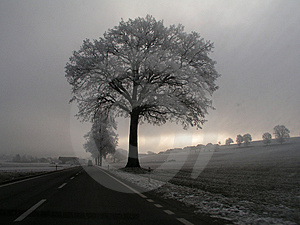 Winter light Stock Photos