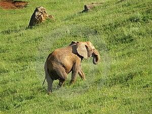 Elephant Walking Stock Photo - Image: 1172970