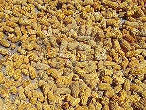 Cereale Che Si Trova Fuori Per Asciugarsi Immagine Stock - Immagine: 1175041
