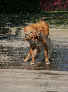 Dog Shake 5 Royalty Free Stock Photography - Image: 1180057