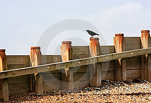 Crow On Breakwater Stock Images - Image: 11801884