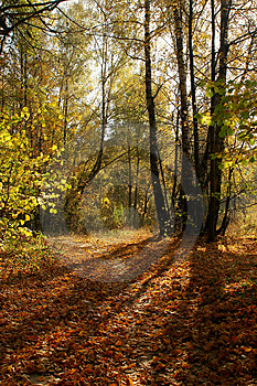 Autumn Forest Lane. Yellow Falled Leafs Stock Photo - Image: 1194490