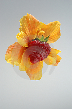 Strawberry And Flower Stock Photography