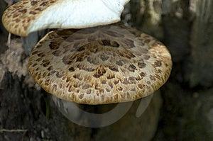 Detalhe do cogumelo Fotografia de Stock