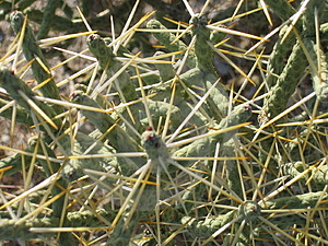 Кактусы пустыни Стоковые Изображения