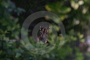 Spinne und Netz Stockbilder