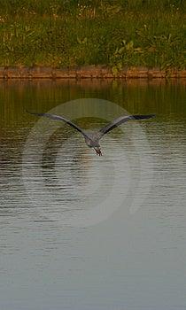 Flying Away.jpg Stock Photo