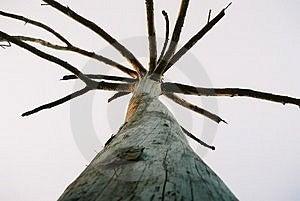 Árvore solitária seca Fotografia de Stock Royalty Free