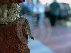 Catapillar Crawling Down Brick Wall Stock Photos