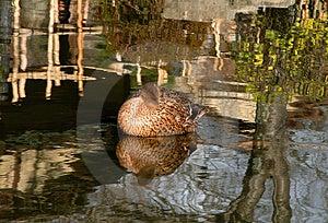 Park Reflections Free Stock Photos