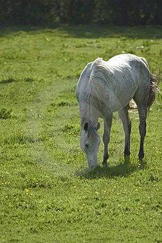 Grazing Horse Stock Photo