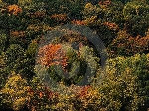 Bosque de Autemn Fotos de archivo