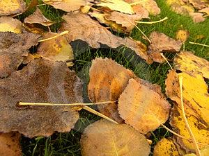 Yellow Leaves Free Stock Photo