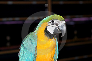 Beautiful Colorful Parrot Stock Image