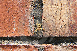Yellow Spider On Brick Free Stock Photo