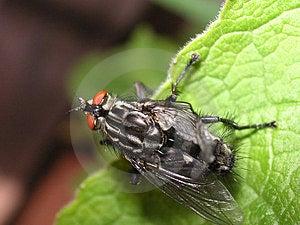 Mouche augmentant ses ailes Photos libres de droits