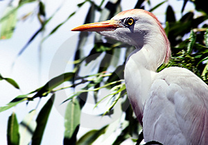 Tropical Bird Stock Images