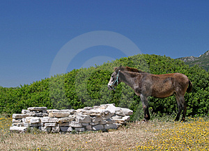 Donkey Standing In A Field Next To A Beach In Spain Stock Photo