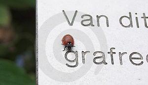 Ladybug Free Stock Photography