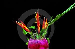 Flower In The Dark Stock Photos